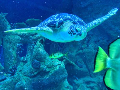 Korytňačka v akváriu