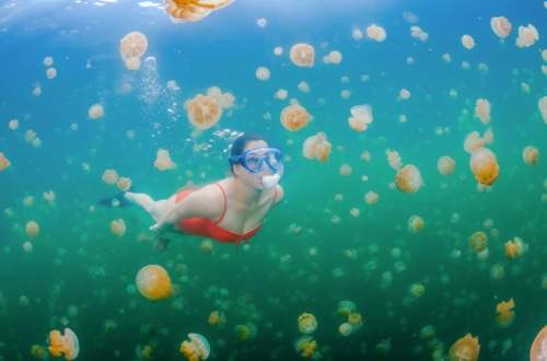 Jazero medúz