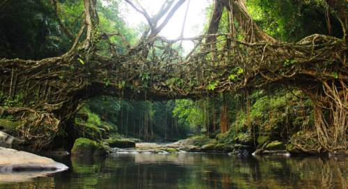 Stromový most