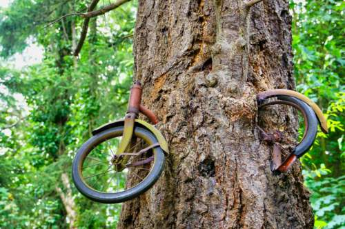 Bicycle tree