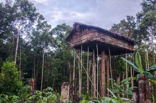 Korowai house, Papua