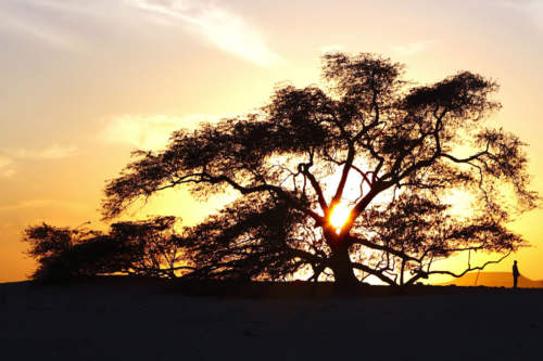 Tree of Live, Bahrain
