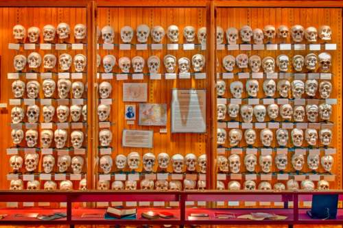 Lekárske múzeum