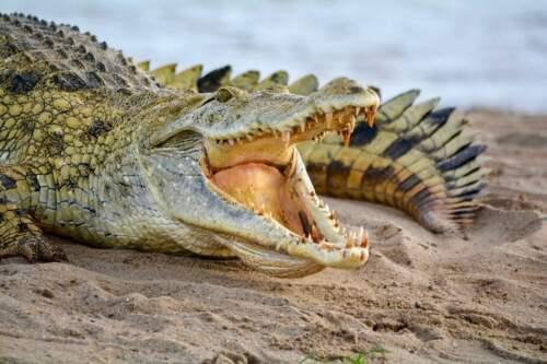 Paga Crocodile Pond, Ghana